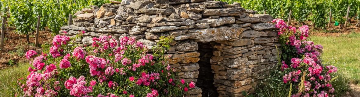 Ziemianka w ogrodzie – jak zbudować współczesną piwniczkę ogrodową