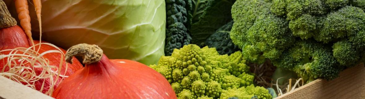 Zbiory warzyw w październiku