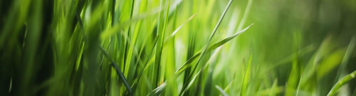 Nawozy do trawników – dobrane do potrzeb i pory roku
