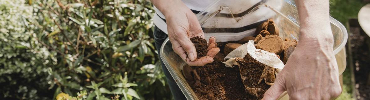 Fusy od kawy wykorzystaj w ogrodzie