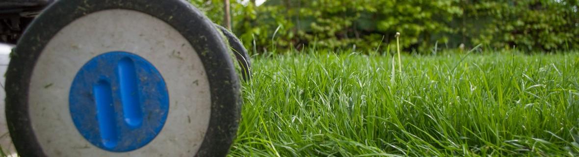 Mulczowanie trawnika – czy warto je wykonywać