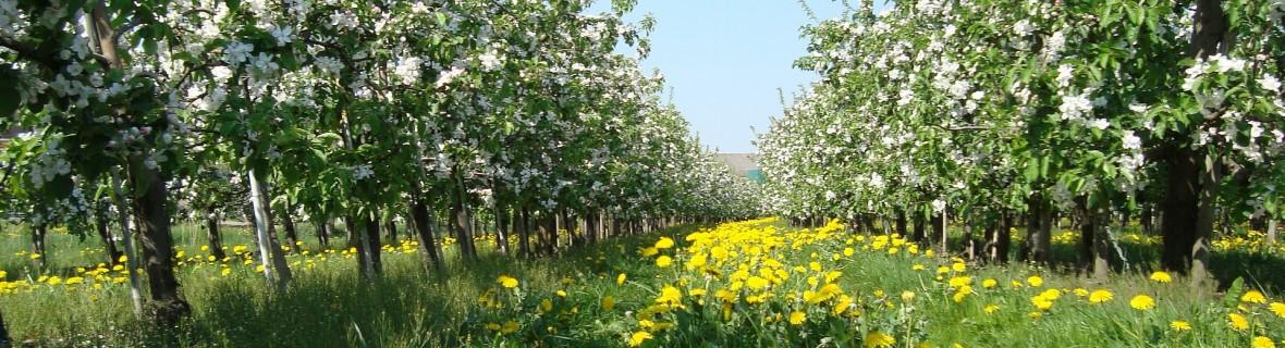 Jakie rośliny warto sadzić pod drzewami owocowymi