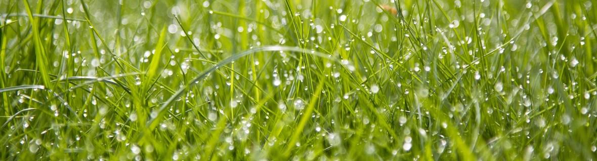 Jak dbać o trawnik w upały