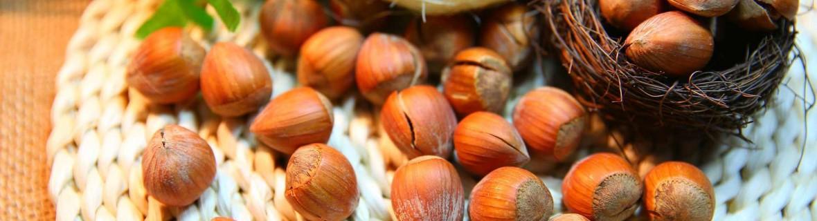 Orzech laskowy – przysmak nie tylko dla wiewiórek