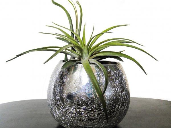 Oplątwy – dekoracyjne rośliny prawie bez pielęgnacji