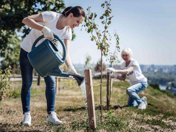 Jesień – dobry czas na zakładanie ogrodu