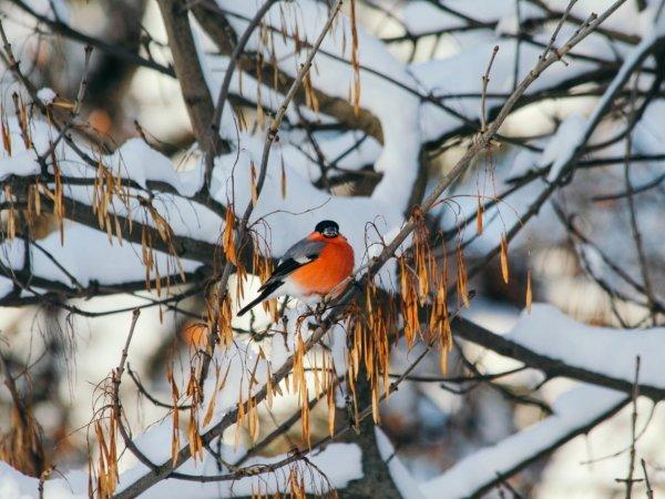 Róbmy zdjęcia ptakom w ogrodzie