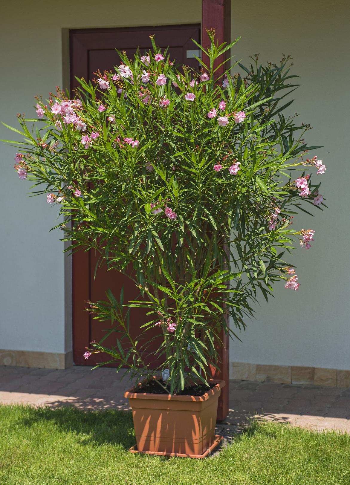 Rośliny W Pojemnikach Z Tarasu I Balkonu Jak Je Ochronić
