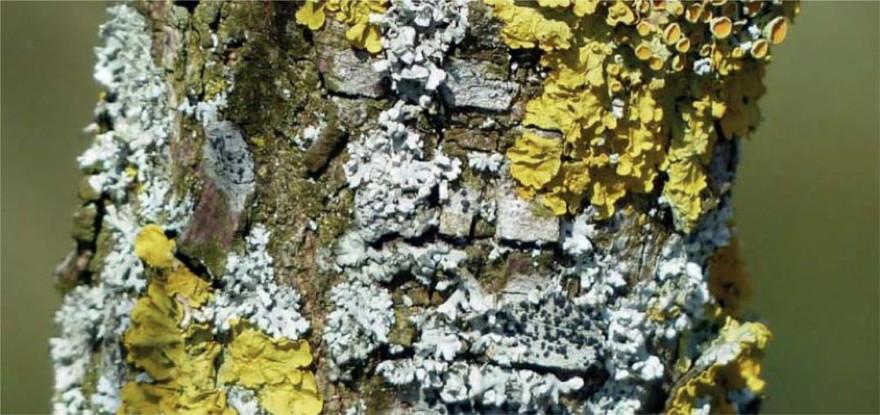 Fot 1. Glony oraz grzyby-pleśnie w naturze
