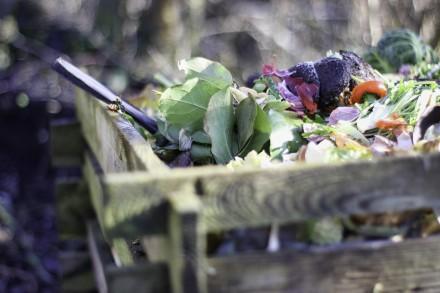 Do kompostownika wrzucamy wyłącznie odpady organiczne (fot. pixabay.com)