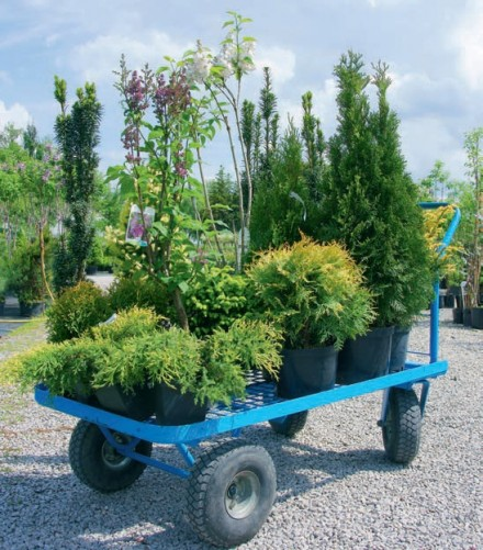 Zdj 2. Transport roślin i nie tylko