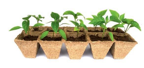 Domowy ekologiczny rozsadnik