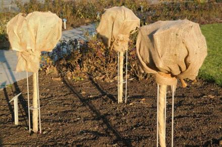Okrywanie roślin pozwala im przetrwać mroźną zimę (fot. pixabay.com)