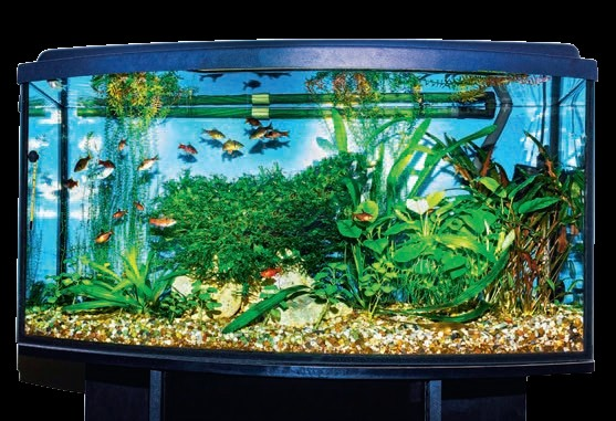 Domowe Akwarium Grupa Psb Materiały Budowlane Remontowe
