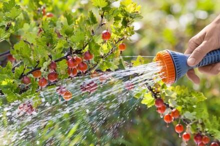 Odpowiedniej długości wąż ogrodowy to niezbędny element wyposażenia każdego ogrodu