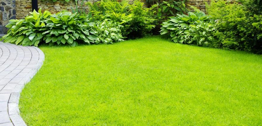 Zdj. 2. Szczególną opieką otaczamy trawniki do chwili, w której powstaje zwarta darń. Źródło: Archiwum KRONEN.