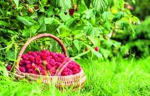 Owocowy ogród użytkowy