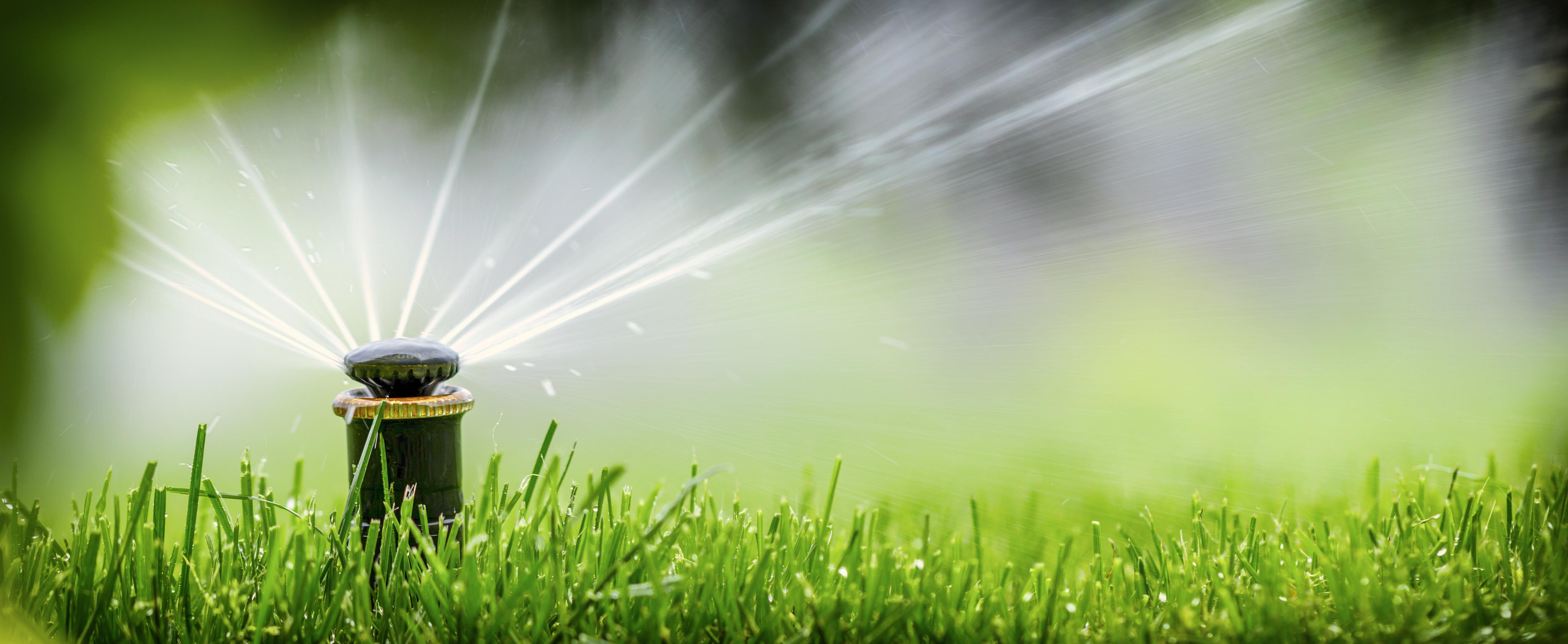 oszczedne-podlewanie-ogrodu-jak-to-robic-z-glowa