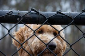 Jak zabezpieczyć siatkę ogrodzeniową przed ucieczkami psa