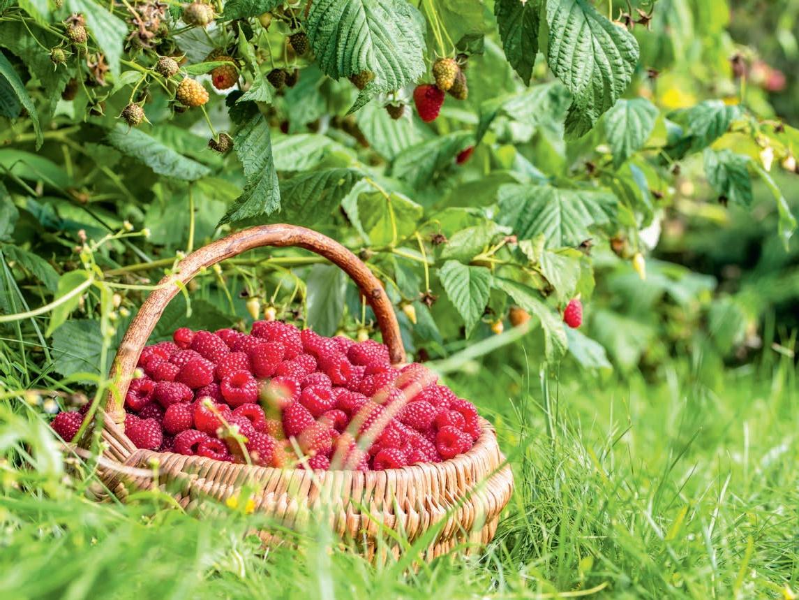 owocowy-ogrod-uzytkowy