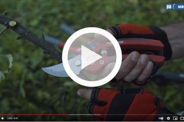 Jak wybrać najlepsze narzędzia do pielęgnacji ogrodu z marką PROLINE?