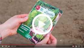 Wysiew nasion w maju, czerwcu, lipcu. Zobacz praktyczne porady!