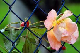 Jak zrobić ogrodzenie z siatki?