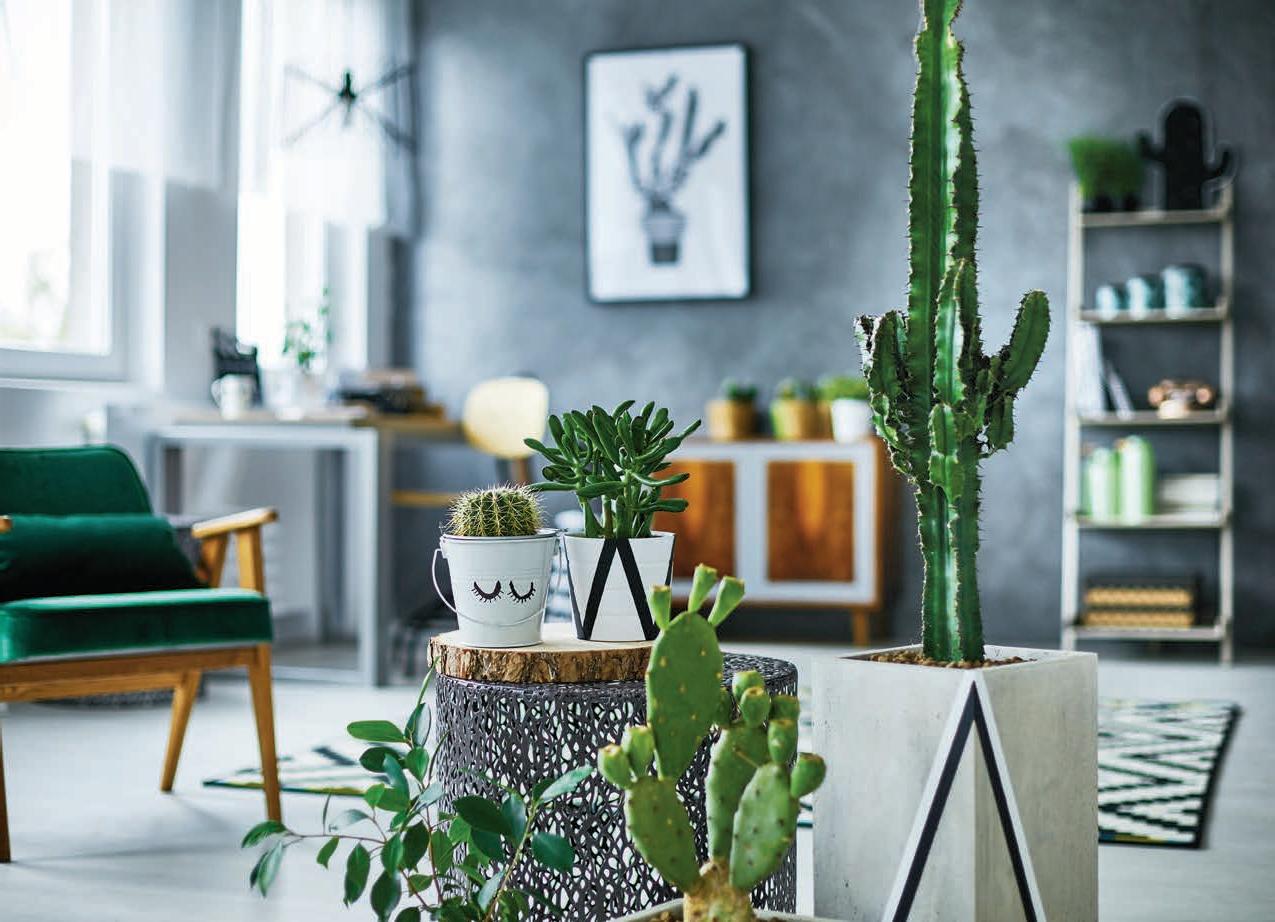 kaktusy-az-tak-nie-kluja