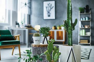 Kaktusy aż tak nie kłują