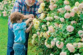 Róże pachnące latem