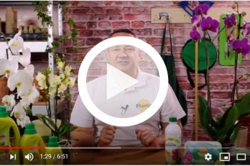 Wszystko co powinieneś wiedzieć o pielęgnacji storczyków!
