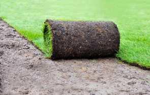 Trawnik z rolki – czy warto