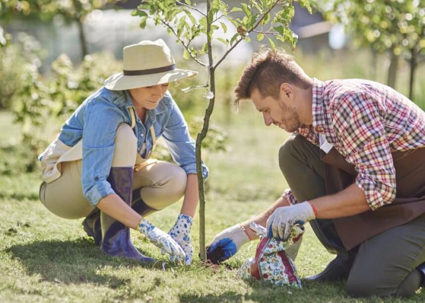 jak-zalozyc-i-pielegnowac-ogrod-z-drzewami-owocowymi-sadzenie-i-pielegnowanie-drzew-owocowych