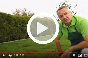 Jak i kiedy najlepiej założyć wymarzony trawnik?