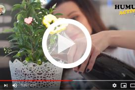 Jak w prosty sposób zadbać o rośliny domowe?