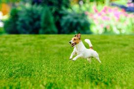 Trawnik jak z bajki
