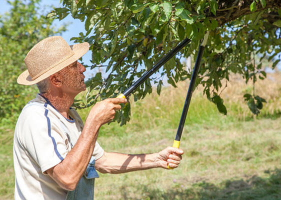jak-przycinac-i-szczepic-drzewka-owocowe