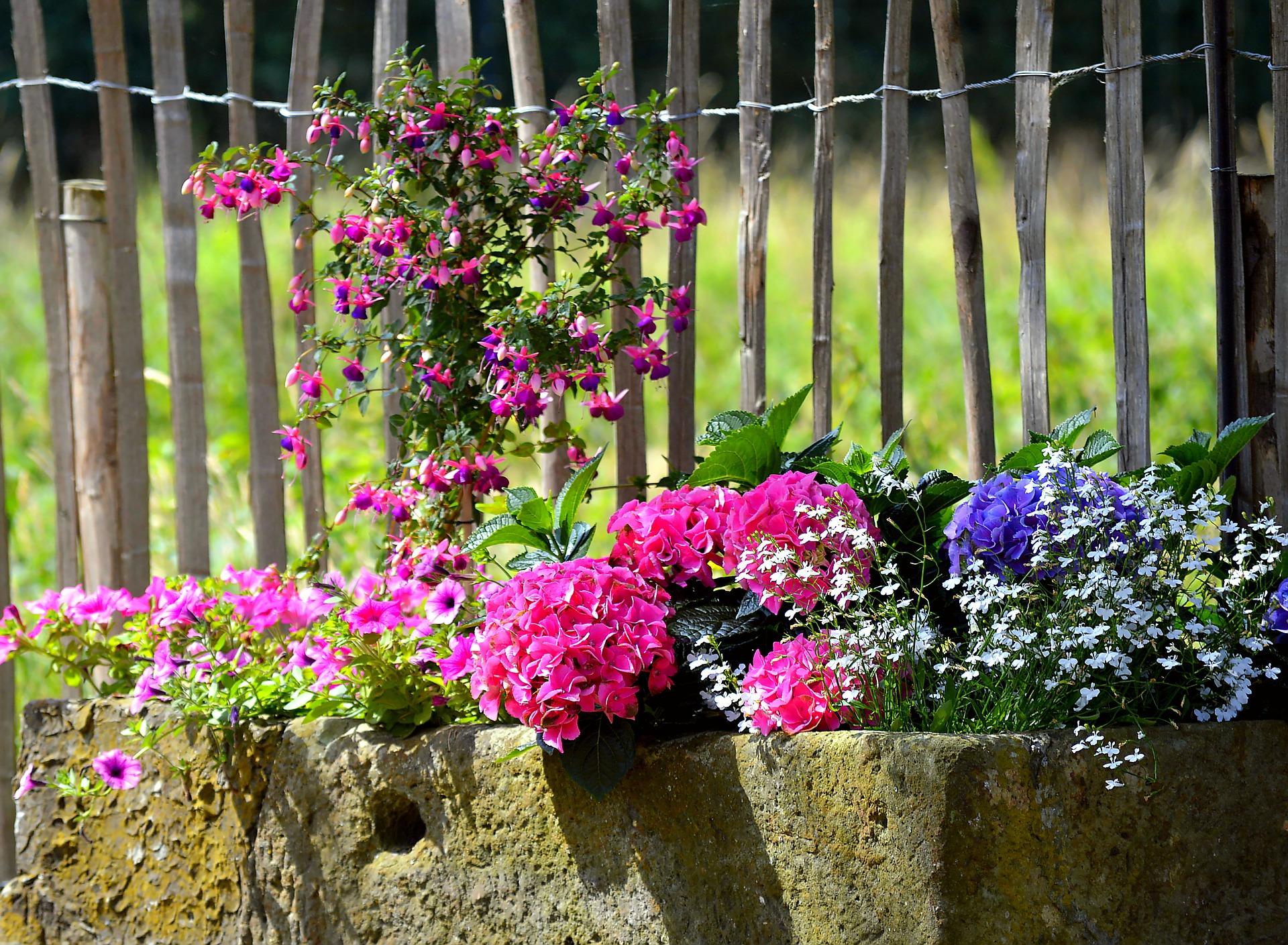 jakie-kwiaty-do-donic-betonowych-kwiaty-i-krzewy-inspiracje