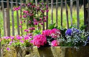 Jakie kwiaty do donic betonowych? Kwiaty i krzewy – inspiracje