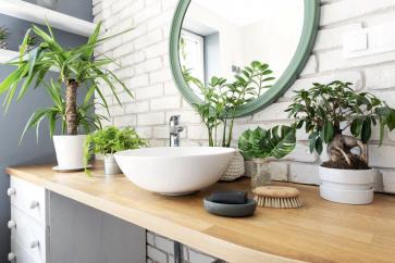 Odmiany idealne do łazienki