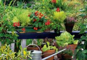 Uprawy balkonowe