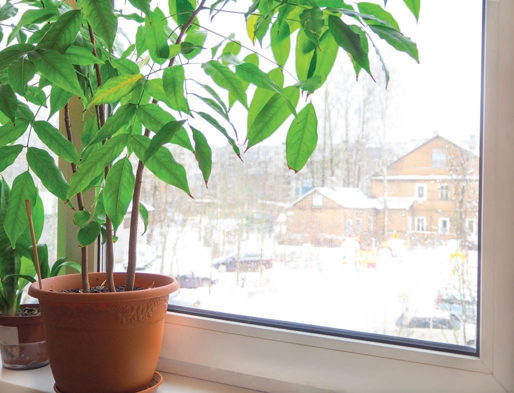 rosliny-zadbane-zima