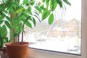 Rośliny zadbane zimą