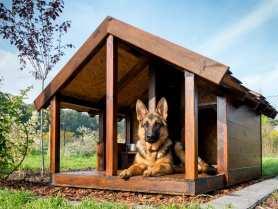 Buda dla psa – jak zbudować budę dla psa pilnującego domu