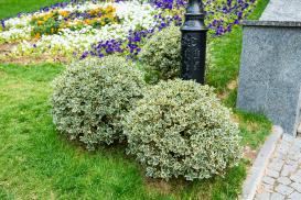 Jakie krzewy posadzić w małym ogrodzie