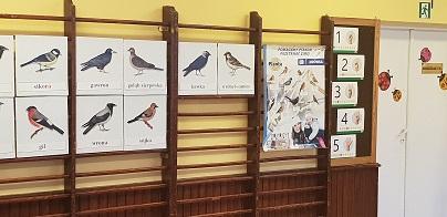 dokarmianie-ptakow-z-mrowka-falenica