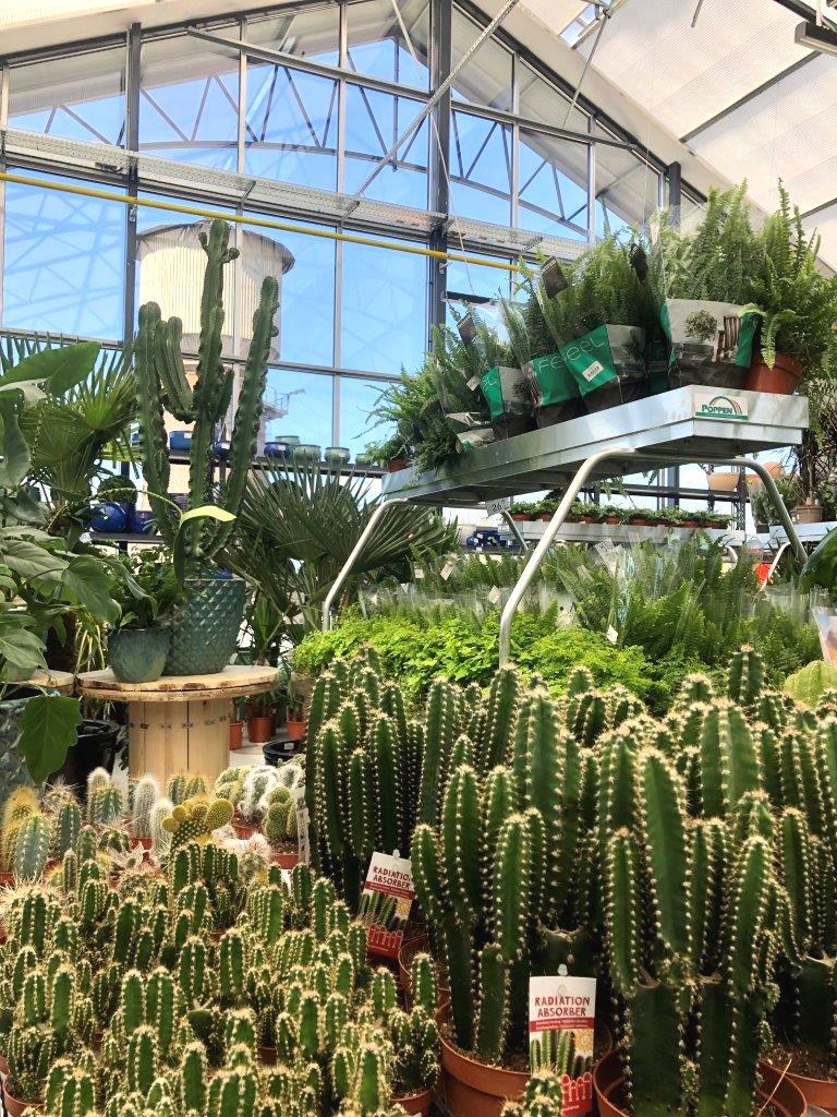 otwarto-centrum-ogrodnicze-o-powierzchni-4000-mkw-w-mrowce-w-nowej-soli