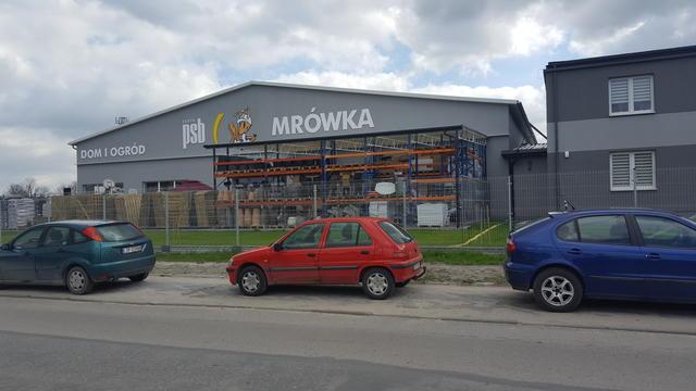 wiosna-mrowki-rosna